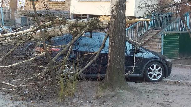 ВКиеве рухнуло дерево наприпаркованные автомобили