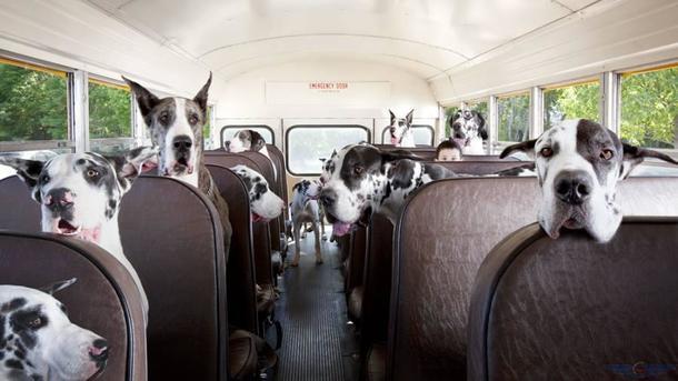 Нужно соблюдать правила перевозки животных в транспорте. Фото: kpt.kiev.ua