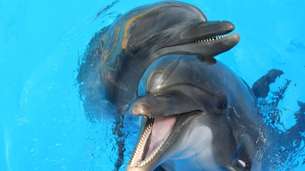 ВКиеве закрыли дельфинарий. Животных перевезли вОдессу