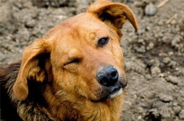 Перевозка собак документы, сбор необходимой документации
