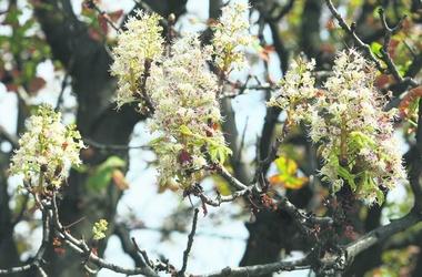<p>Аномалия. Деревья «считают», что наступила весна</p>
