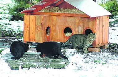 """Результат пошуку зображень за запитом """"зоопарк для котов киев"""""""