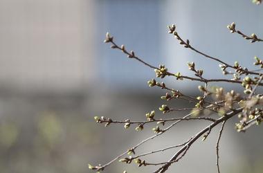 Прогноз погоды в марте в ташкенте