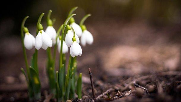 Встолицу Украины пришла ранння весна заблаговременно