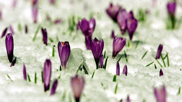 В 1-ый весенний день вКиеве температура побила 137-летний рекорд