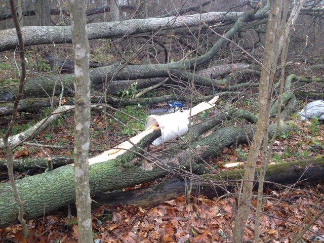 НаКиевщине упавшее ответра дерево насмерть задавило женщину-грибника