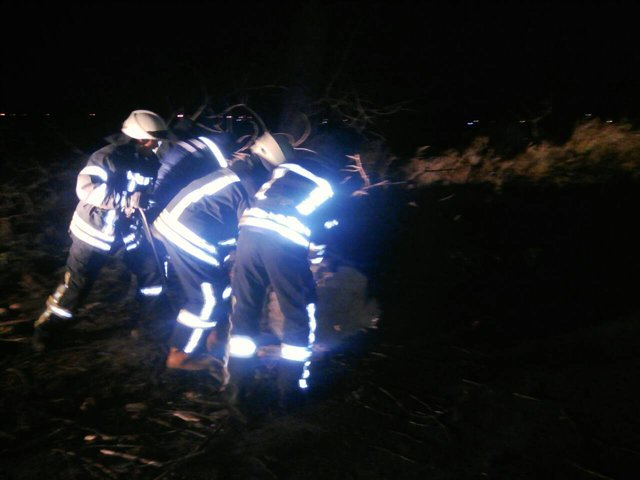 ВКиевской области упавшее дерево убило женщину