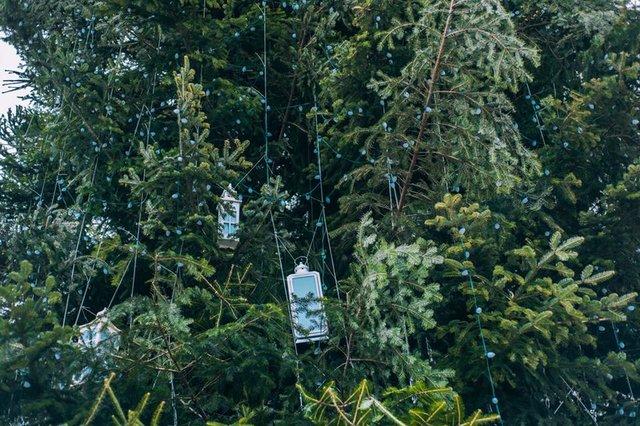ВоЛьвове под «Дударик» открыли главную елку, срезанную водворе здешней жительницы
