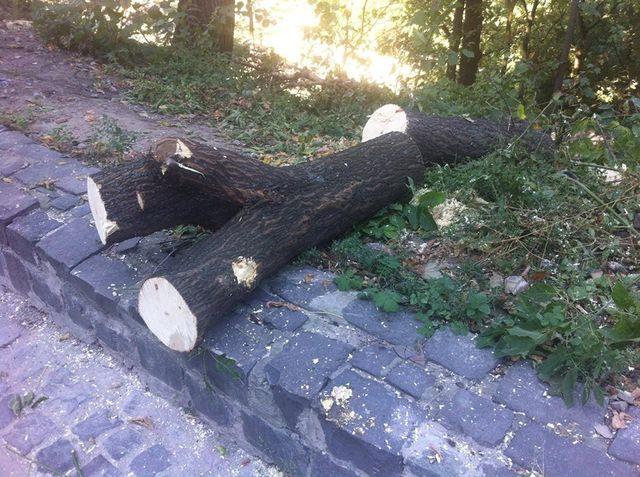 ВКиеве около Пейзажной аллеи нелегально вырубили неменее 160 деревьев