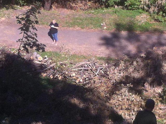 ВКиеве около Пейзажки вырубили неменее 150 деревьев