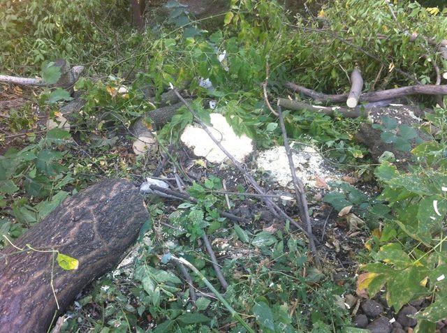 ВКиеве прошла акция против вырубки наПейзажной аллее
