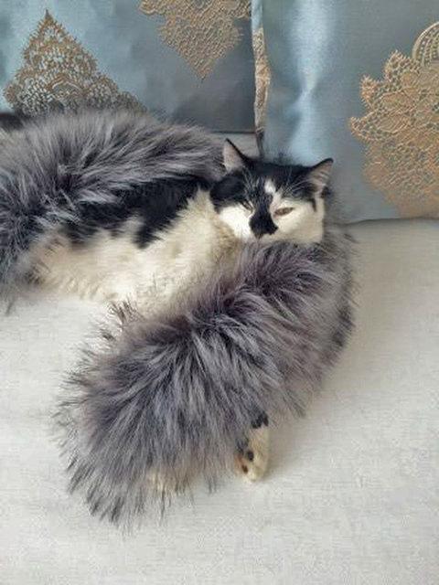 добрый котик видео